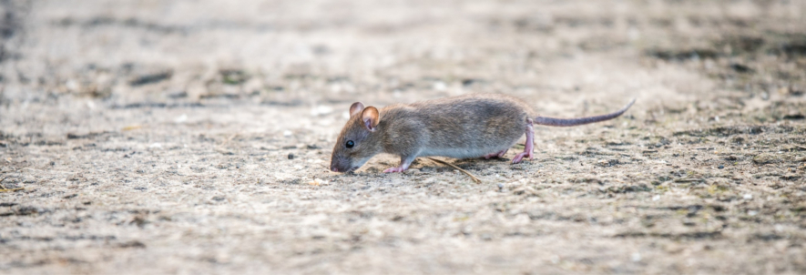 Safety Tips for Handling Rodenticides